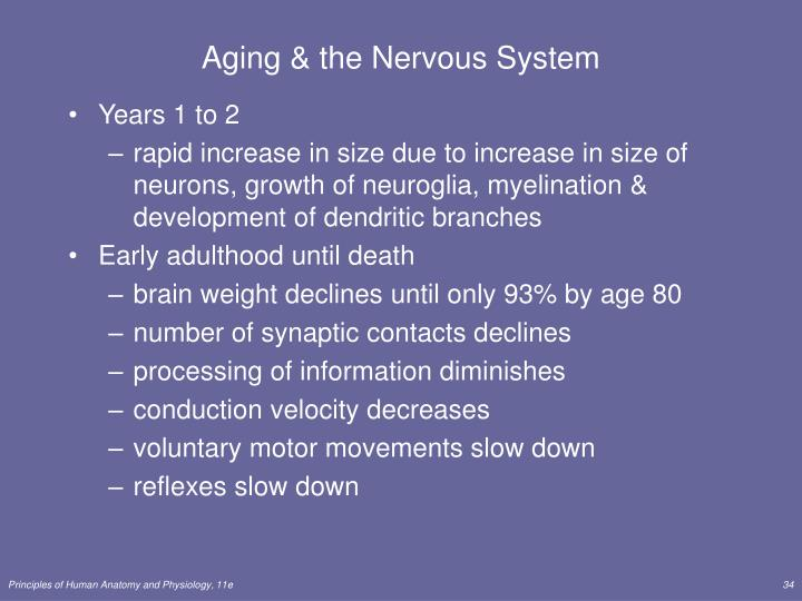 Aging & the Nervous System