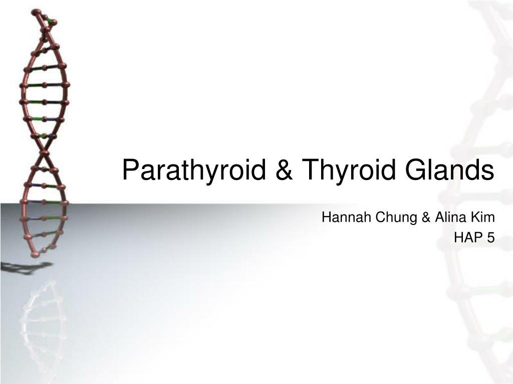 PPT - Parathyroid & Thyroid Glands PowerPoint Presentation - ID:3726052