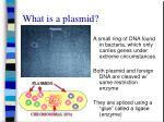 what is a plasmid