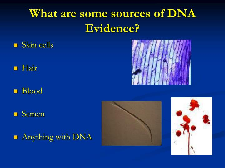 What are some sources of DNA Evidence?