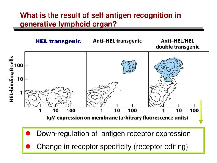 HEL transgenic