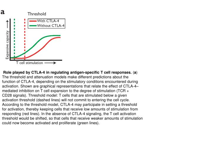 Role played by CTLA-4 in regulating antigen-specific T cell responses.