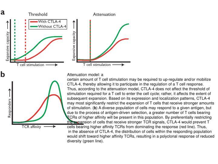 Attenuation model: a