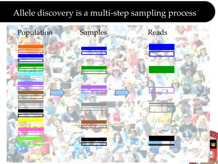 Allele discovery is a multi-step sampling process