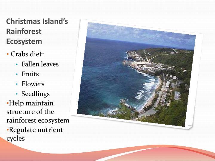 Christmas Island's Rainforest Ecosystem