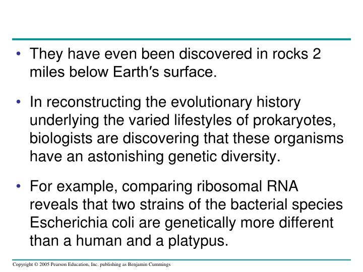 They have even been discovered in rocks 2 miles below Earth′s surface.
