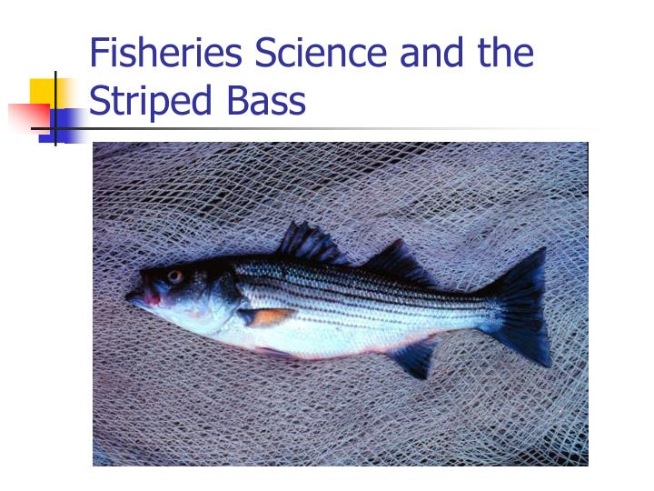fisheries science and the striped bass n.