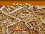 mulches used8