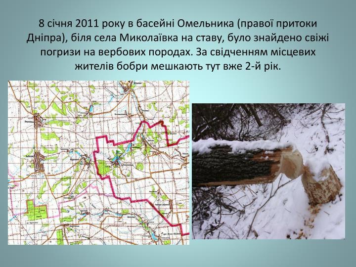 8 січня 2011 року в басейні Омельника (правої притоки Дніпра), біля села Миколаївка на ставу, було знайдено свіжі погризи на вербових породах. За свідченням місцевих жителів бобри мешкають тут вже 2-й рік.
