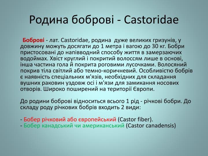 Storidae