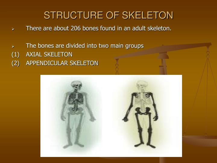 STRUCTURE OF SKELETON