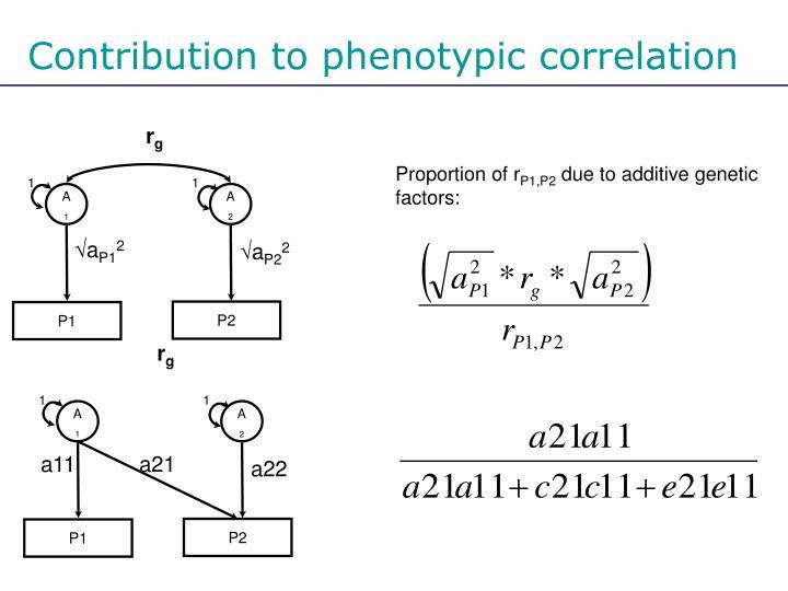Contribution to phenotypic correlation