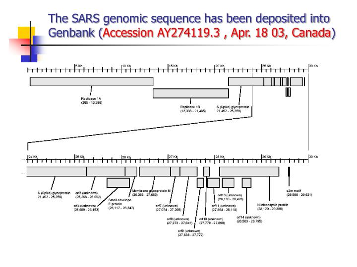 The SARS genomic sequence has been deposited into Genbank (