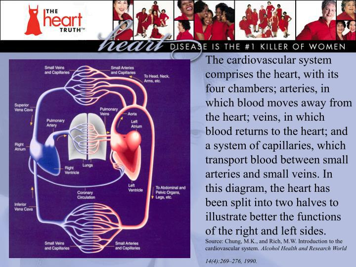 The cardiovascular system comprises the heart, with its four chambers; arteries, in which blood moves away from the heart; veins, in which blood returns to the heart; and a system of capillaries, which transport blood between small arteries and small veins. In this diagram, the heart has been split into two halves to illustrate better the functions of the right and left sides.