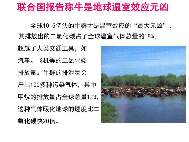 联合国报告称牛是地球温室效应元凶