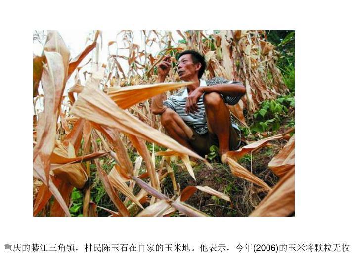 重庆的綦江三角镇,村民陈玉石在自家的玉米地。他表示,今年
