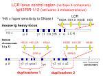 lcr locus control region nel topo 4 enhancers igh3 rr 1 2 nell uomo 3 enhancers locus