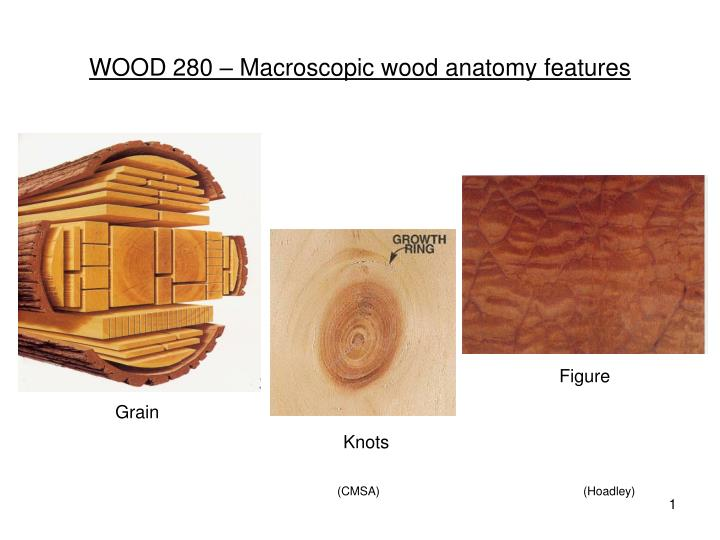 Ppt Wood 280 Macroscopic Wood Anatomy Features Powerpoint