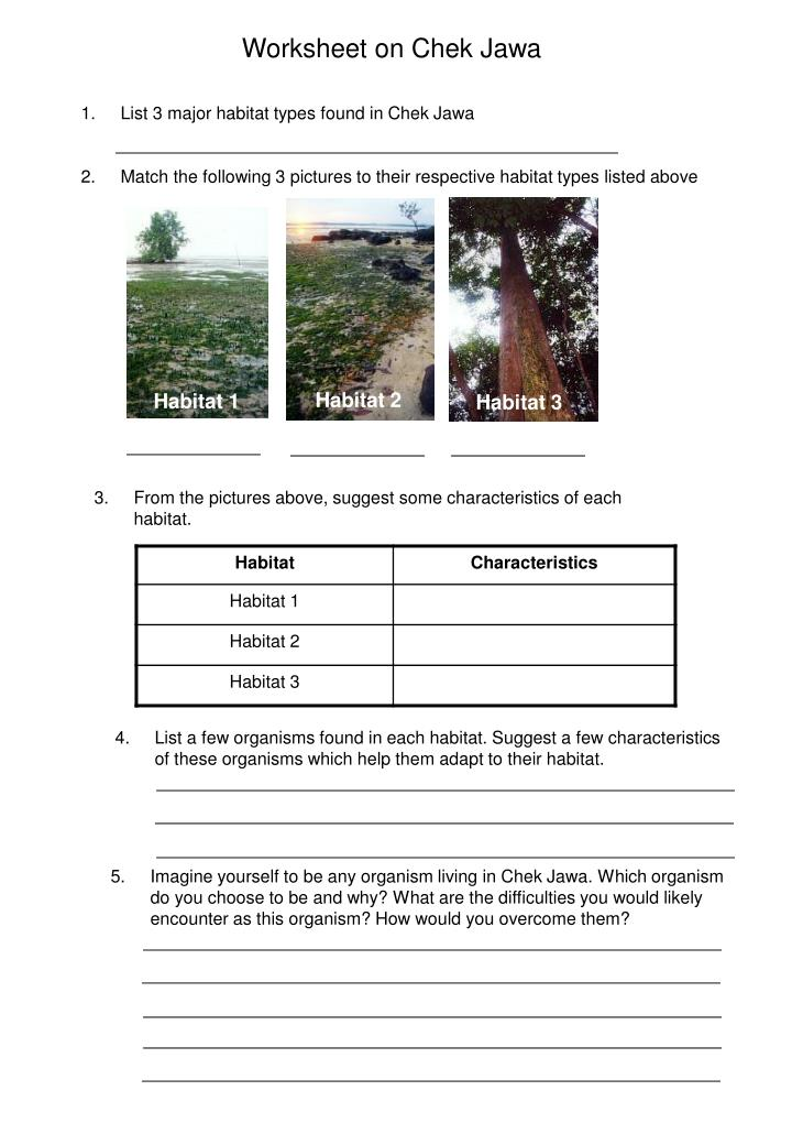 Worksheet on Chek Jawa