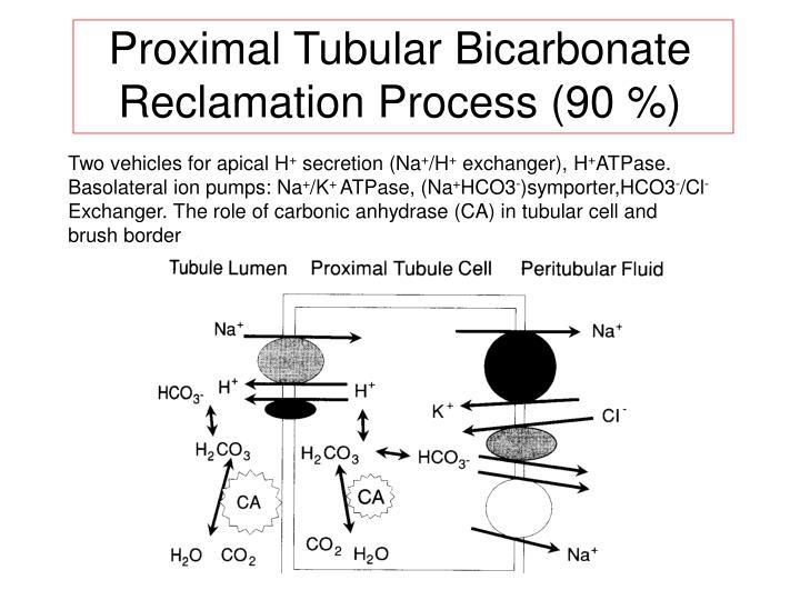 Proximal Tubular Bicarbonate
