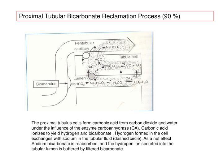 Proximal Tubular Bicarbonate Reclamation Process (90 %)