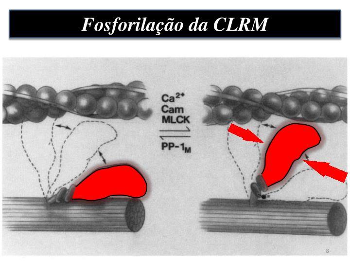 Fosforilação da CLRM