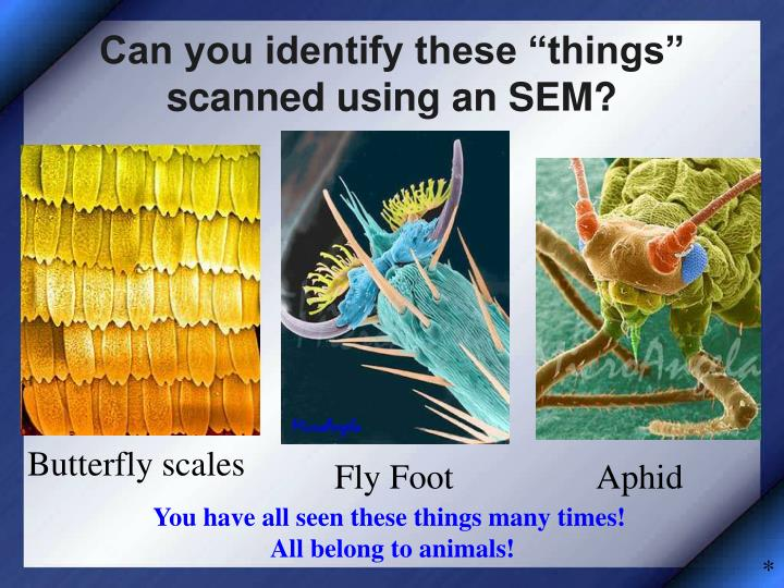 """Can you identify these """"things"""" scanned using an SEM?"""