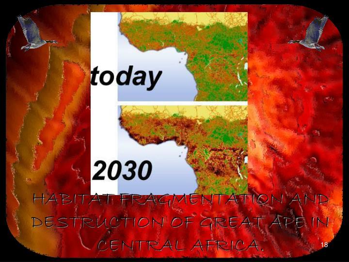 HABITAT FRAGMENTATION AND DESTRUCTION OF GREAT APE IN CENTRAL AFRICA.