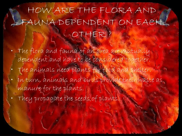HOW ARE THE FLORA AND FAUNA DEPENDENT ON EACH OTHER ?