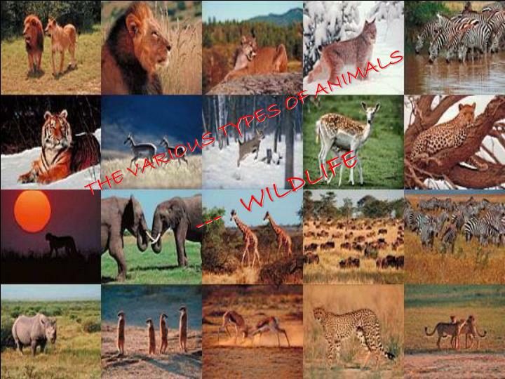 THE VARIOUS TYPES OF ANIMALS