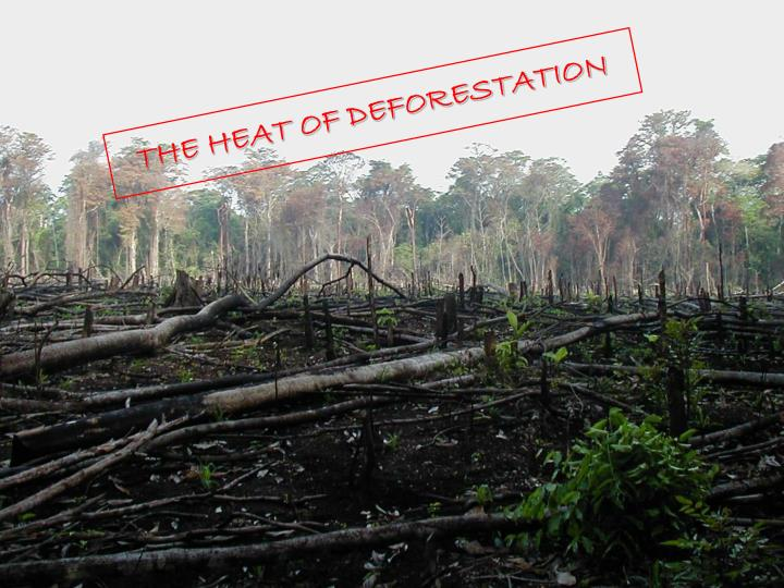 THE HEAT OF DEFORESTATION