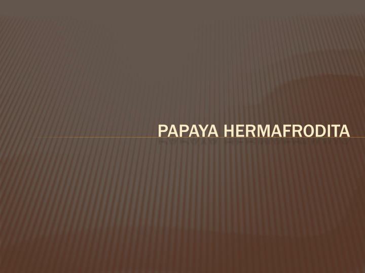 PAPAYA HERMAFRODITA