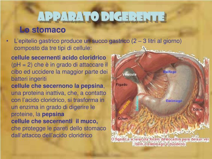 Lo stomaco