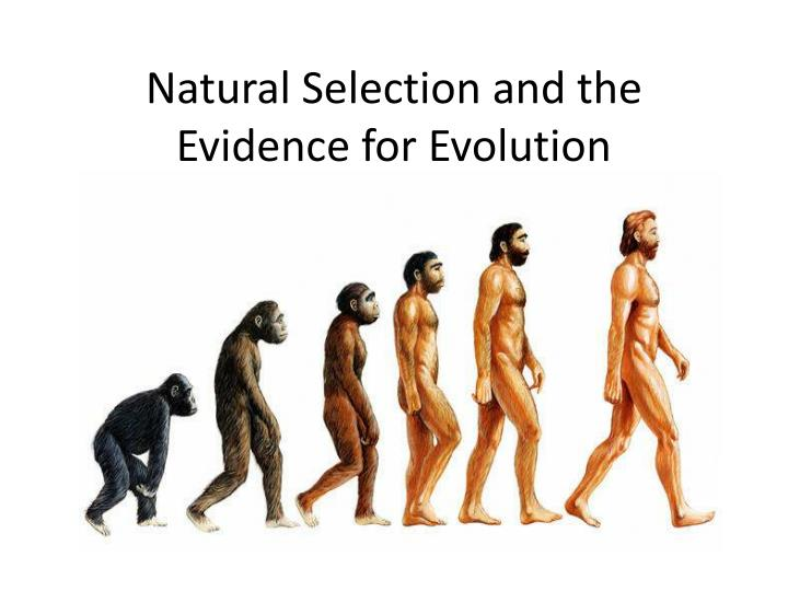 natural selection and evidence for evolution The evidence for evolution evolution by natural selection was indeed a favourite topic in society salons during the 1860s and beyond.