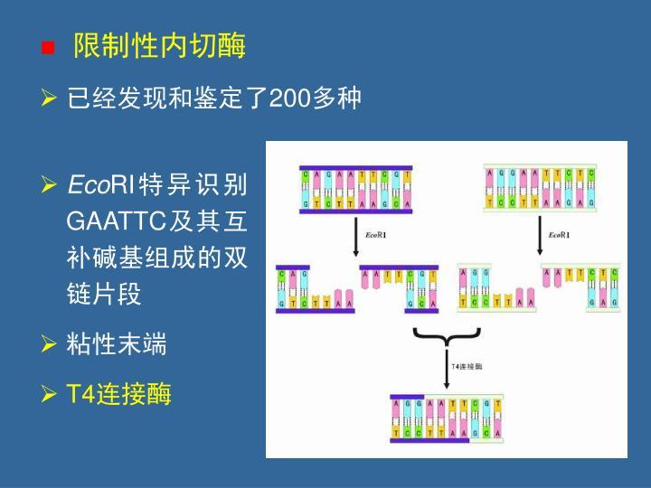 限制性内切酶