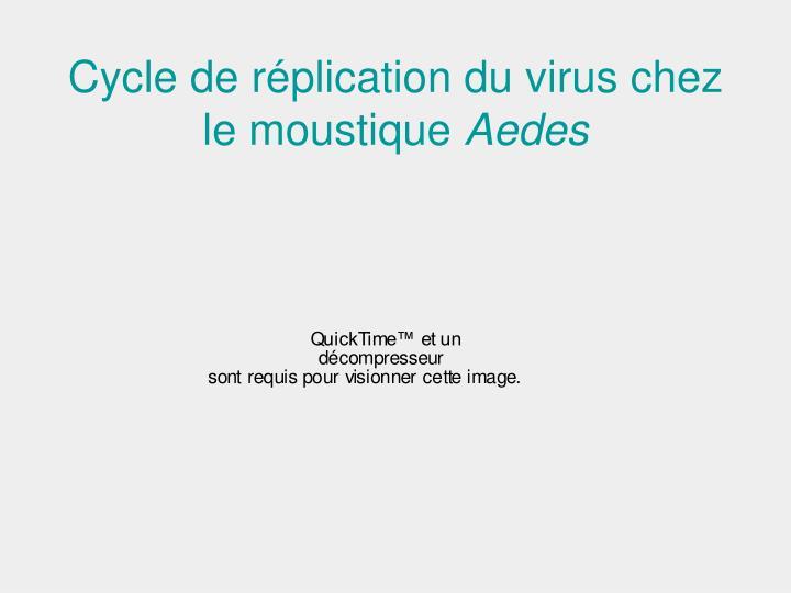 Cycle de réplication du virus chez le moustique