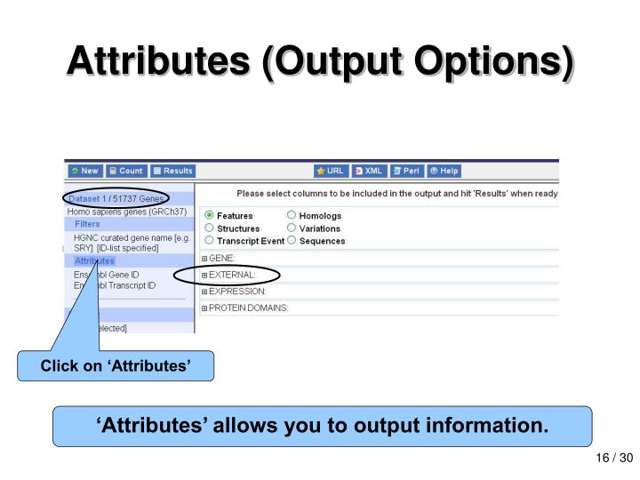 Attributes (Output Options)
