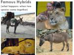 famous hybrids what happens when two species come together