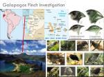 galapagos finch investigation
