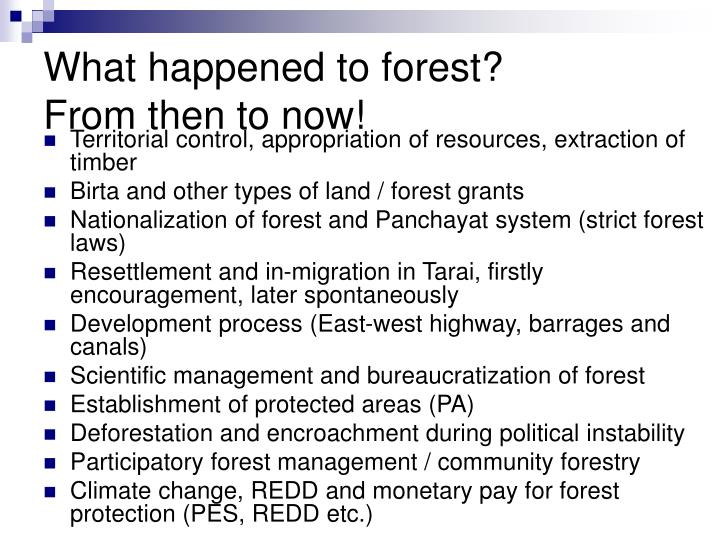 What happened to forest?