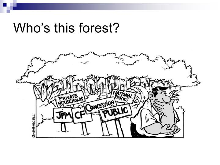 Who's this forest?