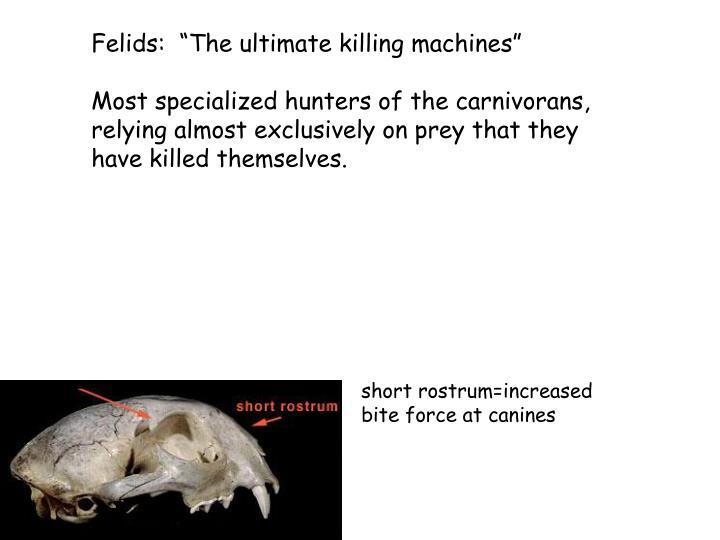 "Felids:  ""The ultimate killing machines"""