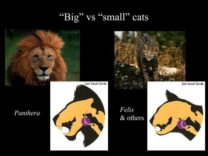 """""""Big"""" vs """"small"""" cats"""