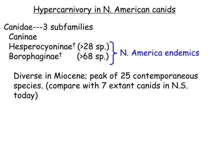 Hypercarnivory in N. American canids