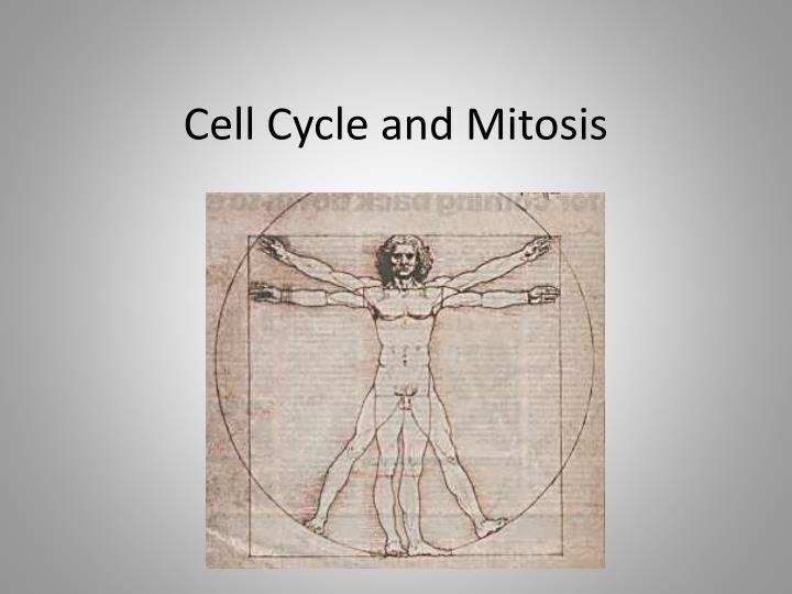cell cycle and mitosis n.