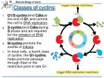 classes of cyclins