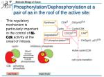 phosphorylation dephosphorylation at a pair of aa in the roof of the active site