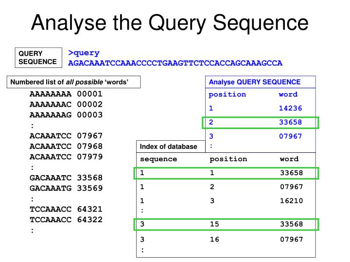 Analyse the Query Sequence