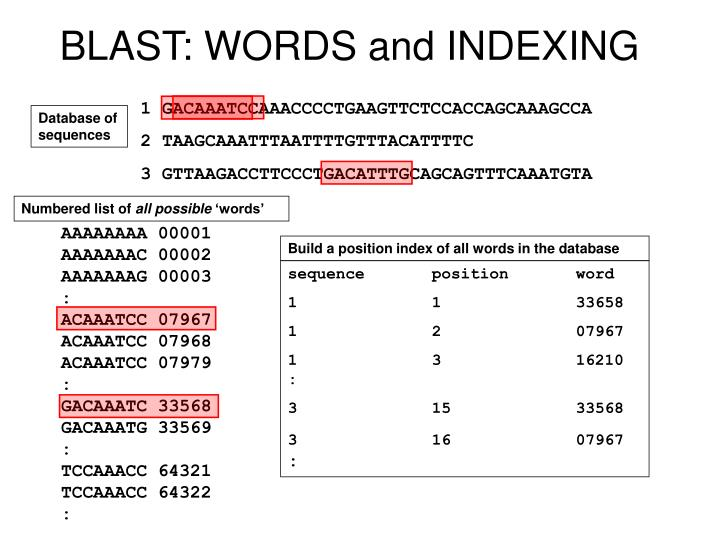 BLAST: WORDS and INDEXING