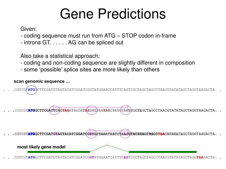 Gene Predictions